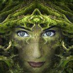 Maca Wurzel Adaptogen / KELLEPICS pixabay