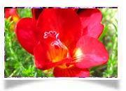 Gesundheit-Blume-gelb-rot.jpg