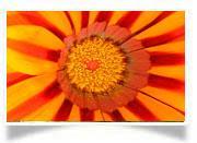 Gesundheit-Blume-rot-gelb.jpg