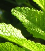 Welche sind die gesündesten Pflanzen?