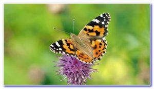 Wo ist die Aromatherapie einsetzbar?