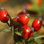 Früchte Immunsystem