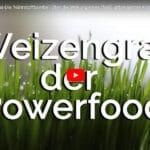 Weizengras gesund